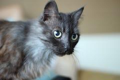 Zwarte kat met grote groene ogen stock afbeelding