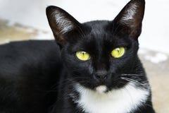Zwarte kat met heldere gele ogen Royalty-vrije Stock Afbeeldingen