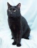 Zwarte kat met het gele ogen zitten Stock Foto