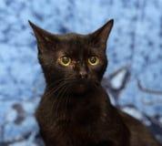 Zwarte kat met het gele ogen zitten Stock Fotografie