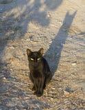 Zwarte kat met het gele ogen zitten Stock Foto's