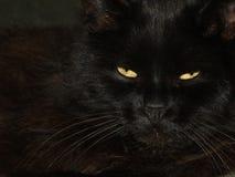 Zwarte kat met twee kleine gele ogen Stock Foto