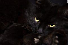Zwarte kat op zwarte achtergrond royalty-vrije stock afbeeldingen