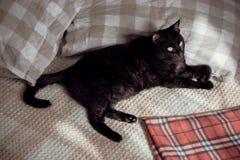 Zwarte kat op bed stock fotografie