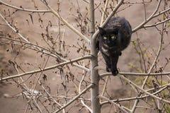 Zwarte kat op de boom Royalty-vrije Stock Foto