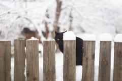 Zwarte kat op de de winterachtergrond royalty-vrije stock afbeelding
