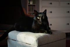 Zwarte kat op de poef Stock Afbeeldingen
