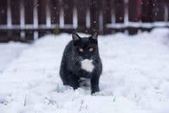 Zwarte kat op de sneeuw stock fotografie
