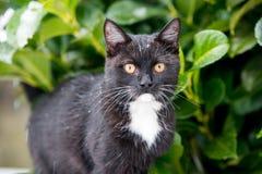 Zwarte kat op de sneeuw stock afbeeldingen