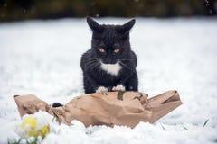 Zwarte kat op de sneeuw royalty-vrije stock fotografie