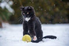 Zwarte kat op de sneeuw stock foto