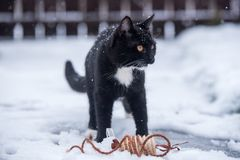 Zwarte kat op de sneeuw royalty-vrije stock foto's