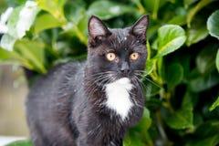 Zwarte kat op de sneeuw stock foto's