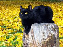 Zwarte kat op gele bladeren stock afbeeldingen