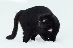 Zwarte kat op witte achtergrond Royalty-vrije Stock Foto
