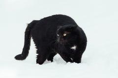 Zwarte kat op witte achtergrond Royalty-vrije Stock Foto's
