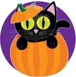 Zwarte Kat in Pompoen Stock Afbeelding