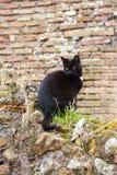 Zwarte kat in ruines in Rome royalty-vrije stock afbeeldingen
