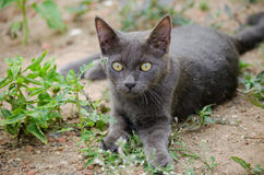 Zwarte kat Thailand Royalty-vrije Stock Fotografie