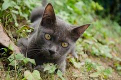 Zwarte kat Thailand Royalty-vrije Stock Foto's