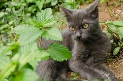 Zwarte kat Thailand Royalty-vrije Stock Afbeelding