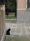 Zwarte kat in Venetië Stock Afbeeldingen