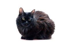 Zwarte kat vooraan Stock Foto
