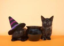 Zwarte katjes naast ketel, één die heksenhoed dragen royalty-vrije stock foto's