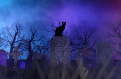 Zwarte katten in begraafplaats stock illustratie