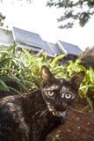 Zwarte katten dichte omhooggaande foto bij de tuin Stock Foto's