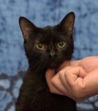Zwarte katten krassende hals Royalty-vrije Stock Afbeeldingen
