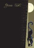 Zwarte kattenachtergrond Royalty-vrije Stock Afbeelding