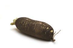 Zwarte mierikswortel Royalty-vrije Stock Foto's