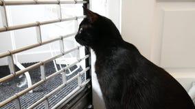Zwarte moggiekat in de venster het letten op buitenkant toe te schrijven aan nieuwsgierigheid stock videobeelden