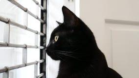 Zwarte moggiekat in de venster het letten op buitenkant toe te schrijven aan nieuwsgierigheid stock video