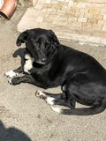 Zwarte mooie dakloze bastaarde hond met droevige ogen die op de grond, het rusten liggen royalty-vrije stock afbeelding
