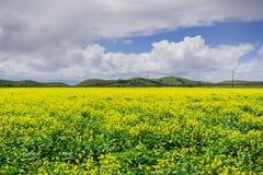 Zwarte mosterdgebied, het Regionale Park van Coyoteheuvels, de baai van San Francisco, Californië royalty-vrije stock foto