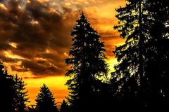 Zwarte nette gesilhouetteerde bomen Royalty-vrije Stock Foto's