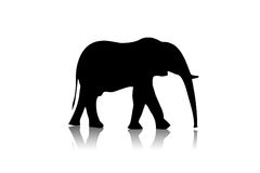 Zwarte olifant Royalty-vrije Stock Afbeeldingen