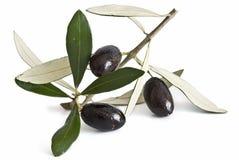 Zwarte olijven. Royalty-vrije Stock Afbeeldingen