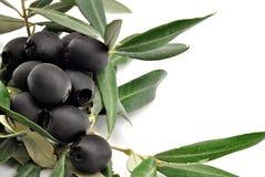Zwarte olijven Stock Afbeelding