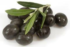 Zwarte olijven met olijftak Stock Foto's