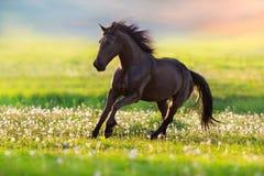 Zwarte paardlooppas Royalty-vrije Stock Afbeeldingen