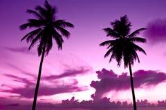 Zwarte palm twee op nachtstrand royalty-vrije stock afbeeldingen