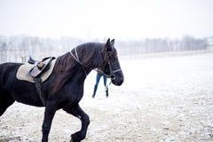 Zwarte parel Royalty-vrije Stock Foto's
