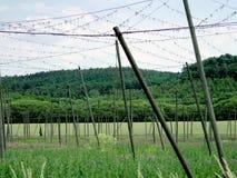 Zwarte peperlandbouwbedrijf in Europa stock afbeelding