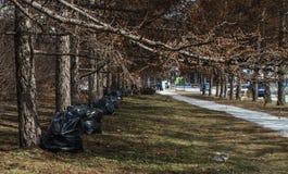 Zwarte plastic vuilniszak Stock Fotografie