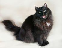Zwarte pluizige kattenzitting op geel Stock Foto's