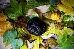 Zwarte pretzel en wortelhumus voor Halloween-griezelige snack, stock afbeelding