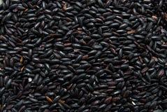 Zwarte rijst Royalty-vrije Stock Afbeeldingen